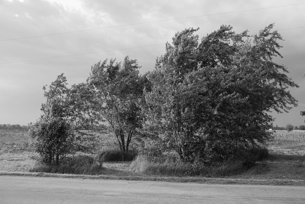 matthew-carroll-438.jpg