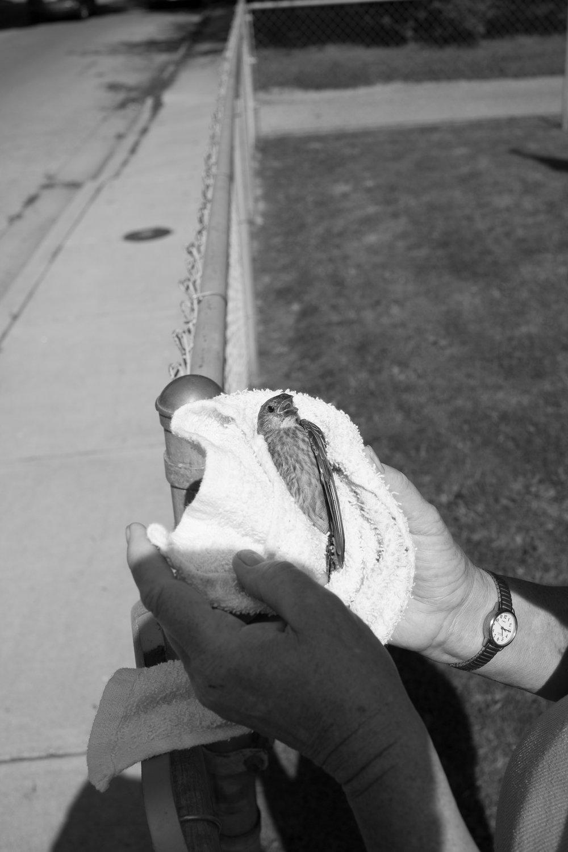 Matthew Carroll-6.jpg
