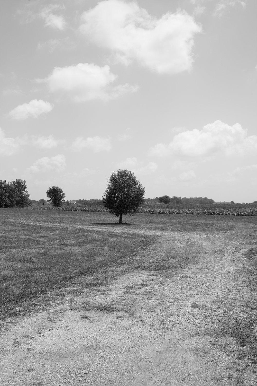 Matthew Carroll-5.jpg
