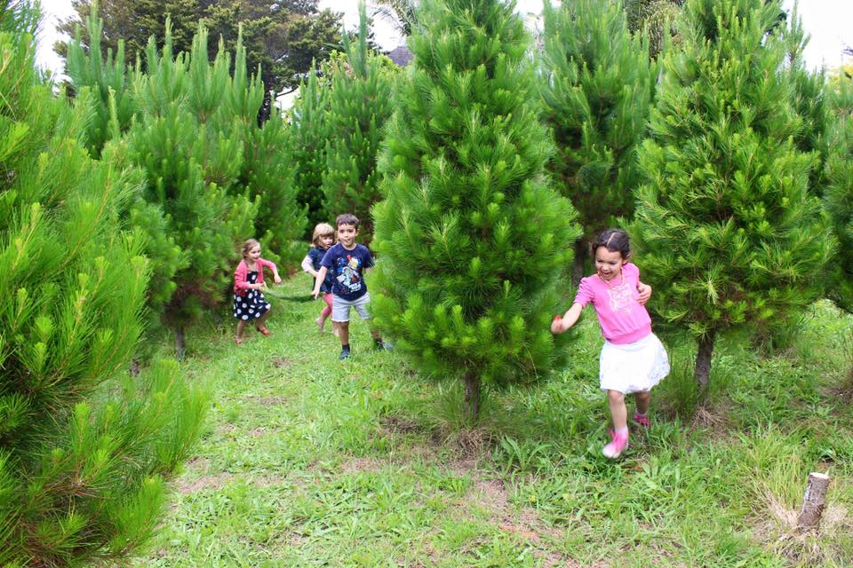 children running in trees.jpg