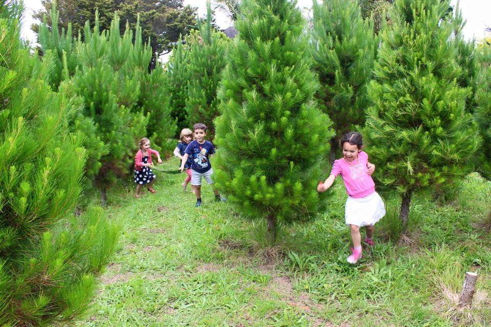 children running in trees.jpg