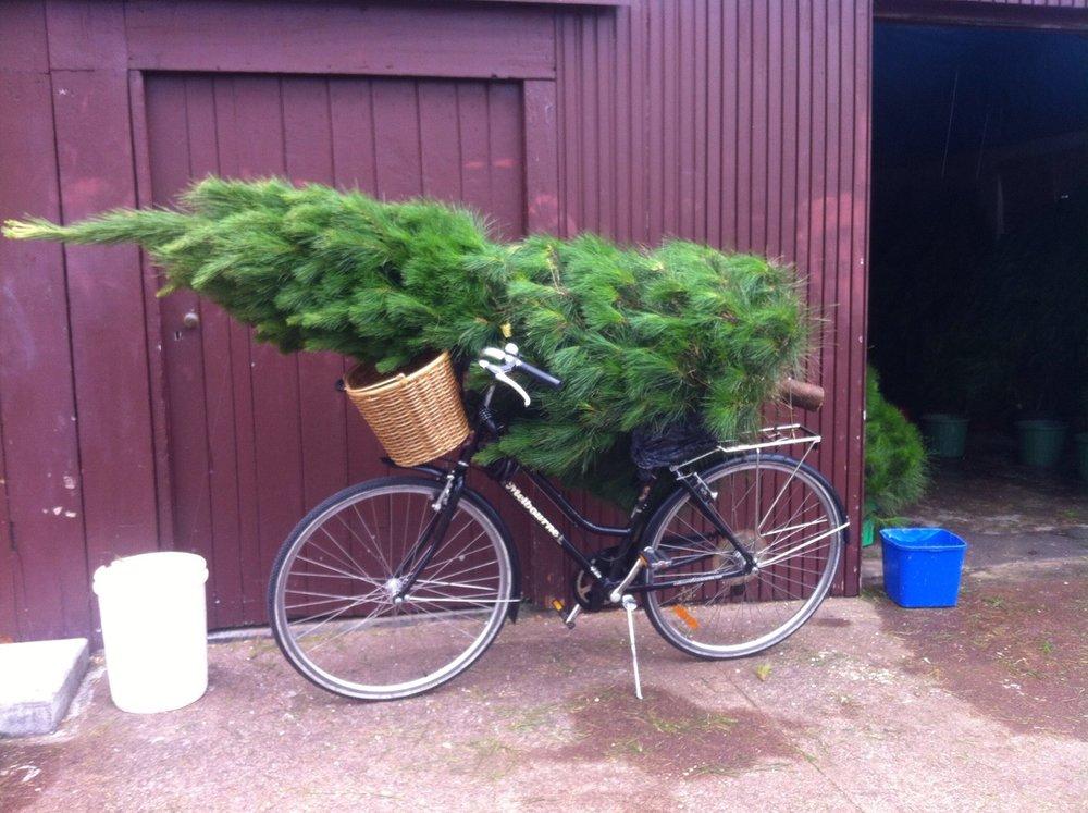 tree on bike.jpg