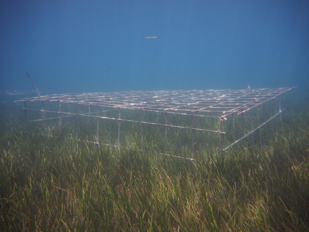 A large exclusion cage to keep out turtles and dugong at Green Island