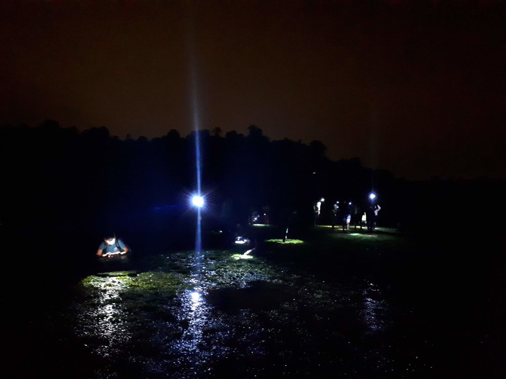Exploring the seagrass meadow at Chek Jawa by torchlight