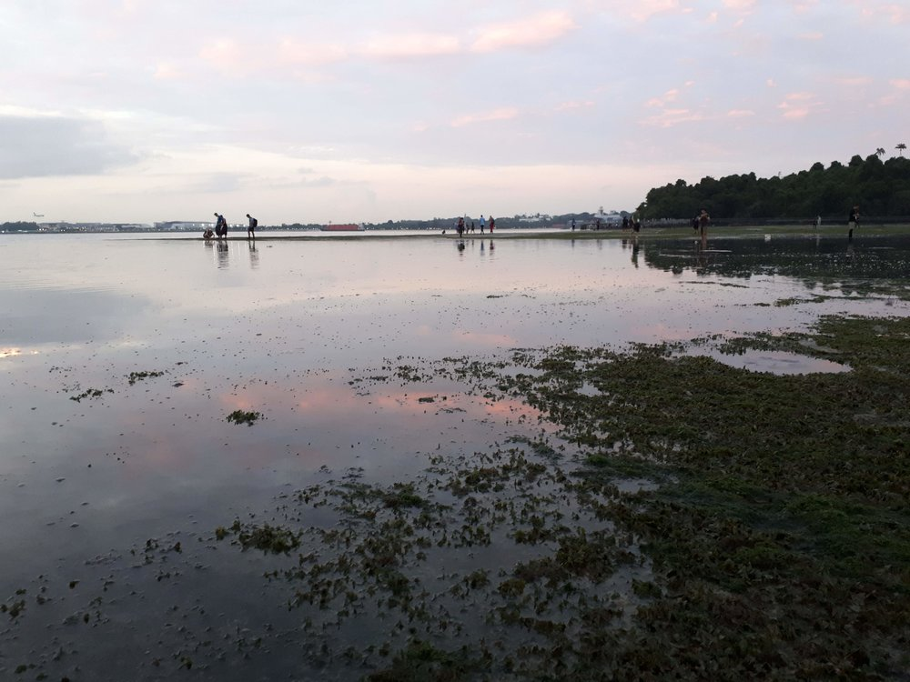 Sunrise on the seagrass meadow