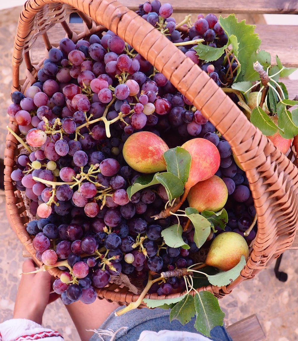 food grape basket.jpg