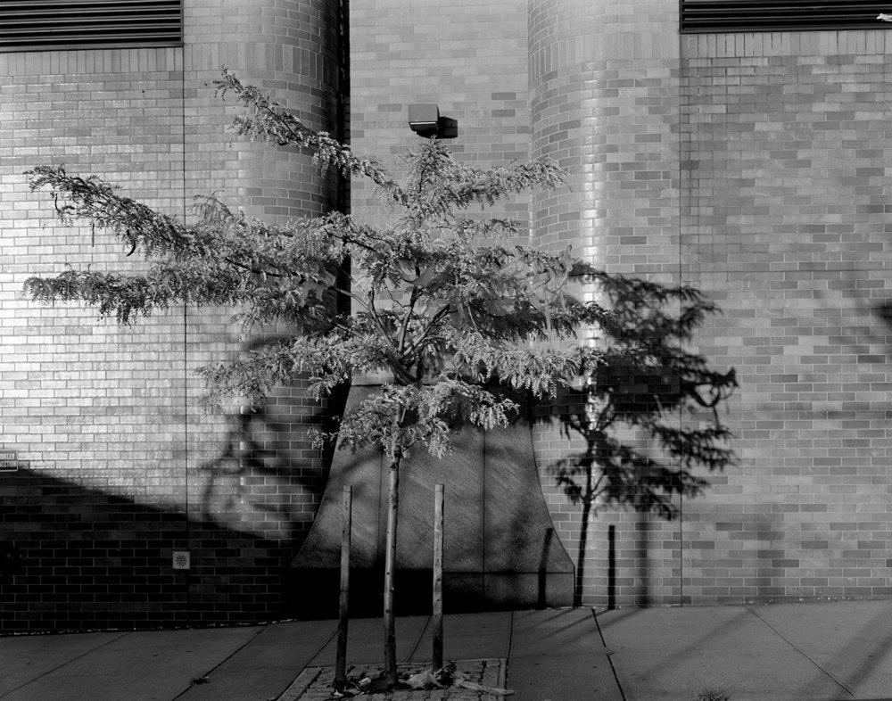 Tree & Bus Depot