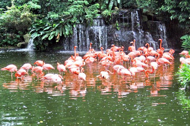 flamingo vacation package las vegas