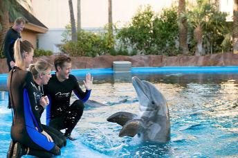 Dolphin Habitat Las Vegas