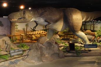 natural history museum vegas