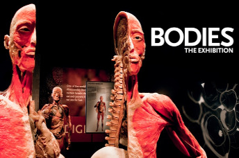 Bodies Exhibit