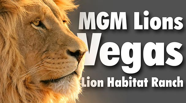 lions habitat las vegas attraction.jpg