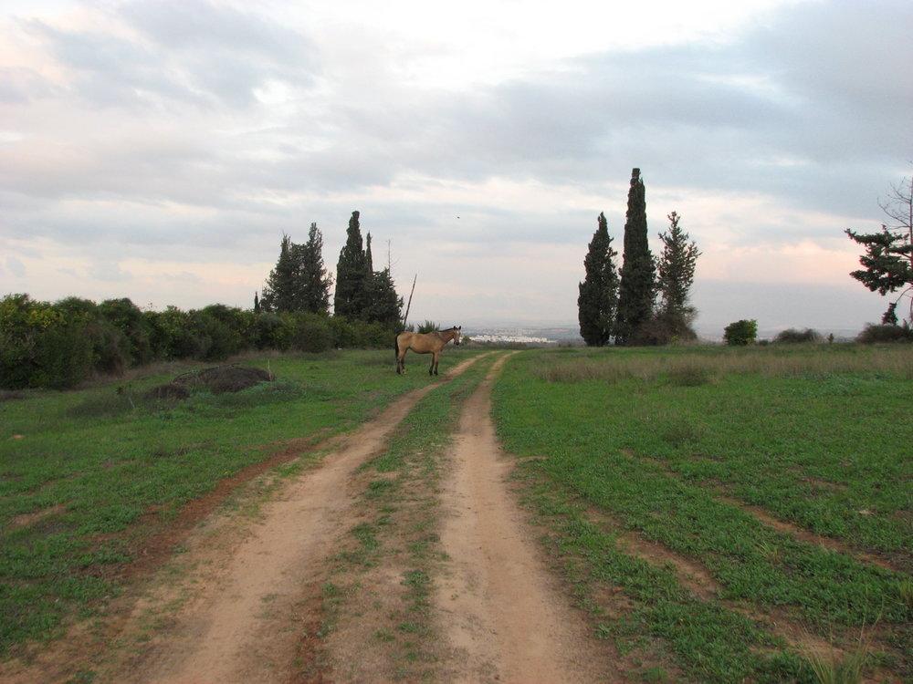 Field 090.jpg