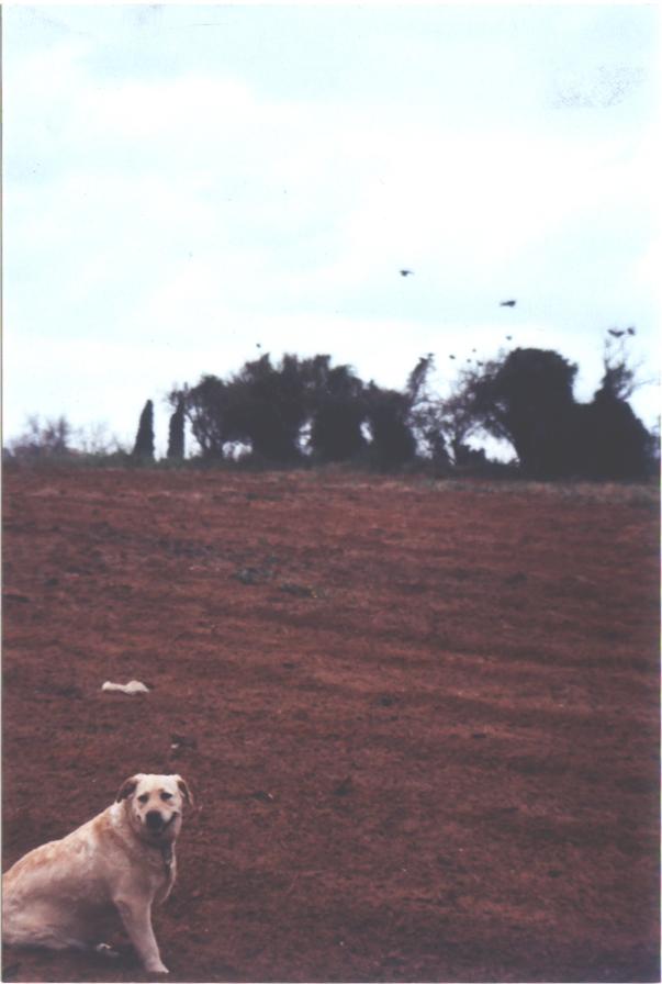 Dog Field 03.jpg