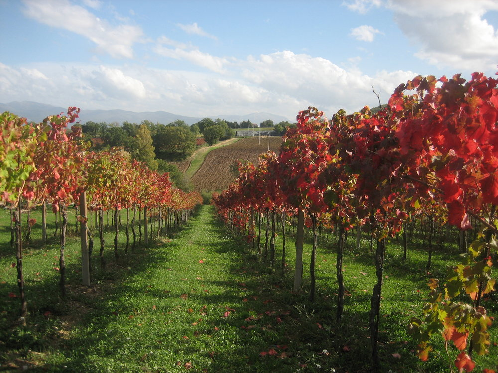 Umbria_Vineyard_0033.JPG