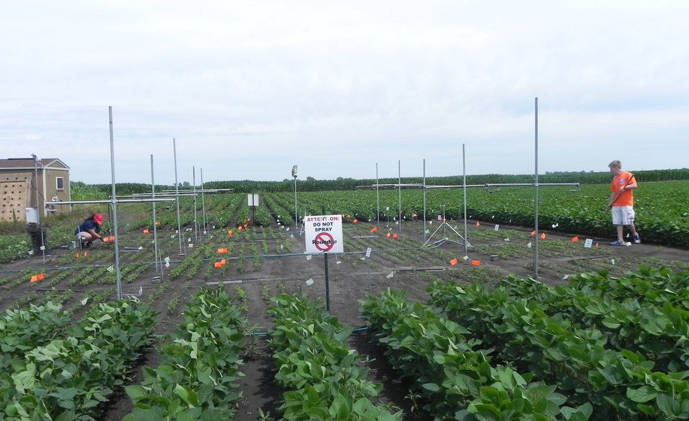 Field site for the NILs of soybean