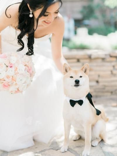 dogs in wedding blog.jpg
