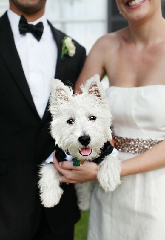 dogs in wedding blog 2.jpg