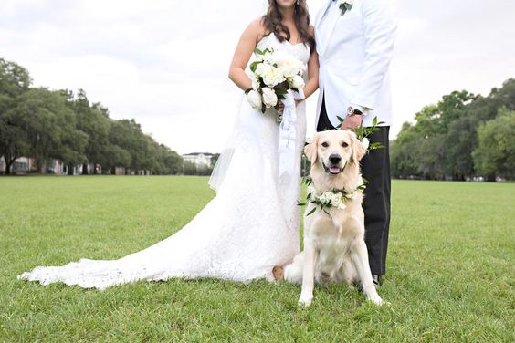 dogs in wedding blog 1.jpg