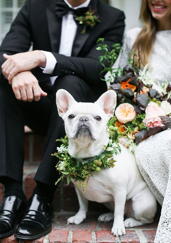 dogs in wedding blog 3.jpg