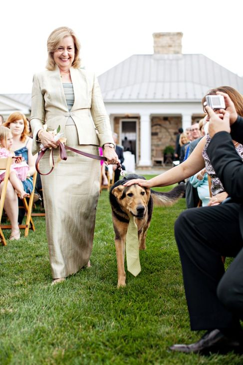 dogs in wedding blog 5.jpg