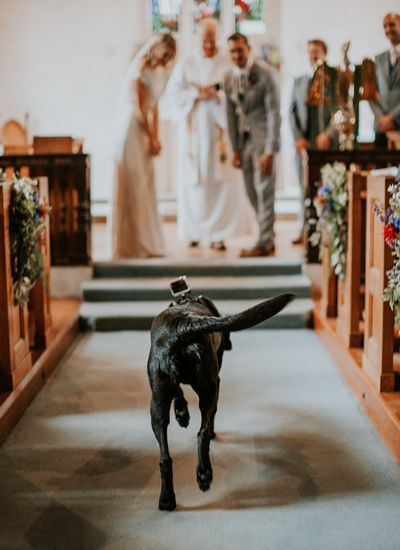 dogs in wedding blog 14.jpg