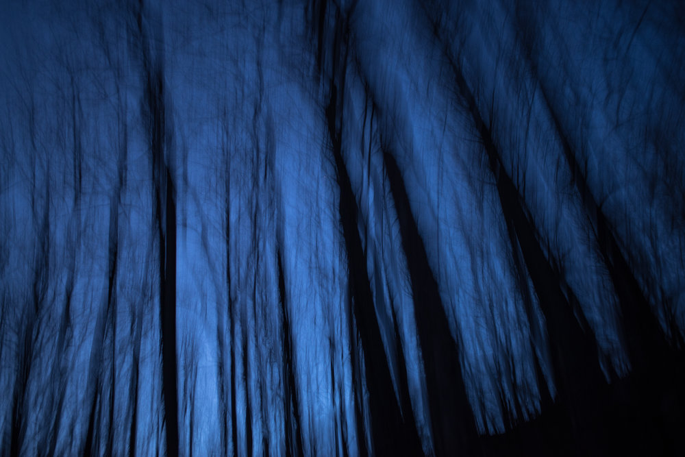 Deep-blue night in the forest, Redding