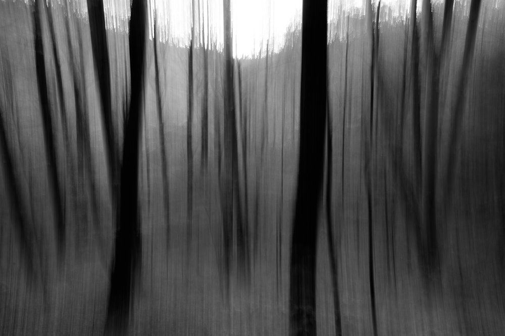 The dark figures of trees dance in the remaining light as night descends on the woods of Trout Brook Valley Preserve, Weston