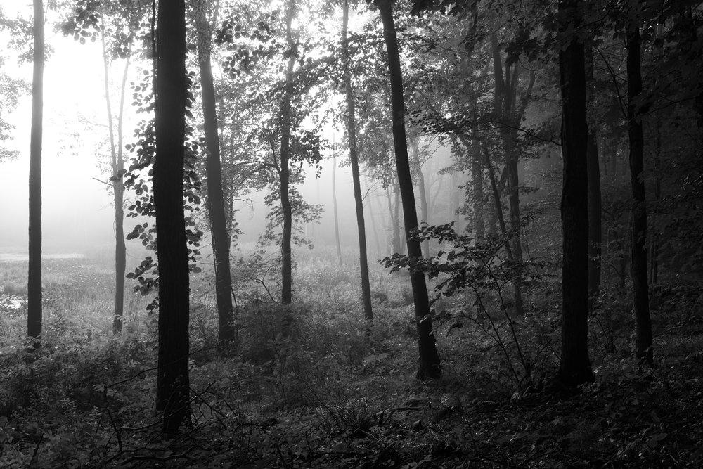 Early morning mist, Bennett's Pond, Ridgefield