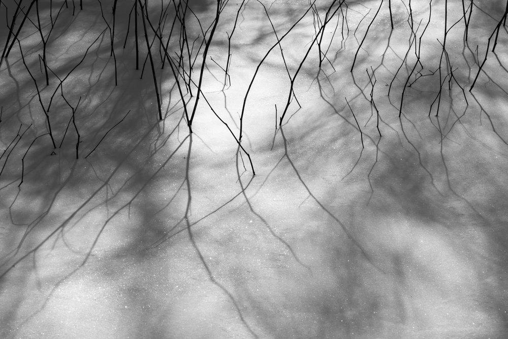 Sapling shadows on fresh snow, Redding