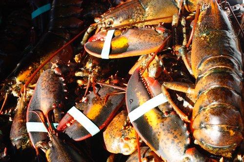 lobsters.jpeg