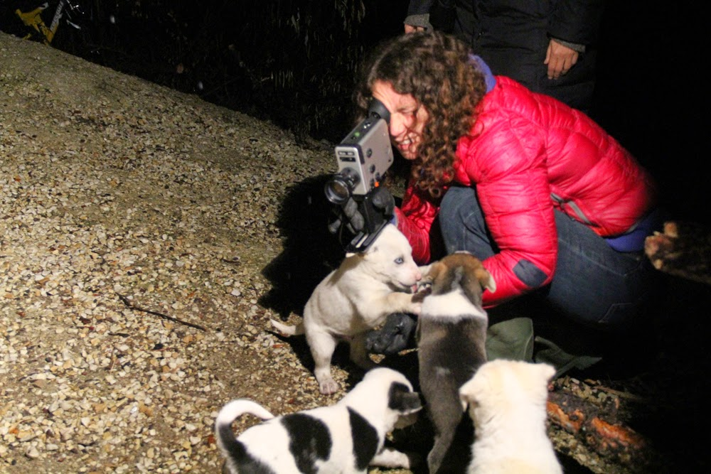 Of course the puppies loved Megan so it was hard to keep them on task..for instance,eating for the camera!