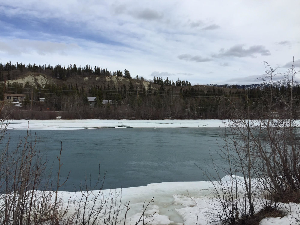 A walk along the Yukon River in search of groceries…
