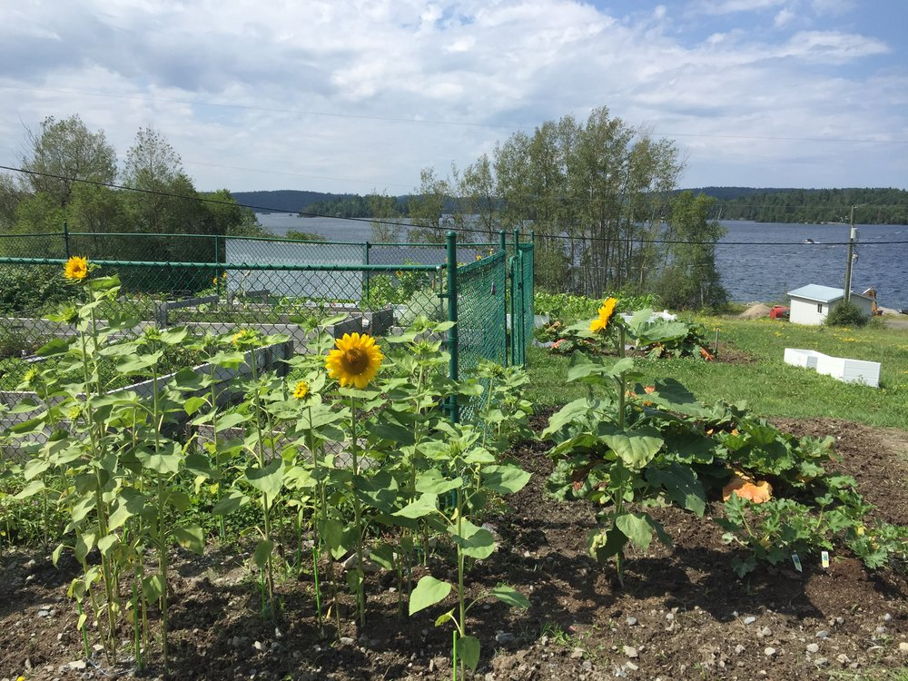 Check out the amazing community garden!