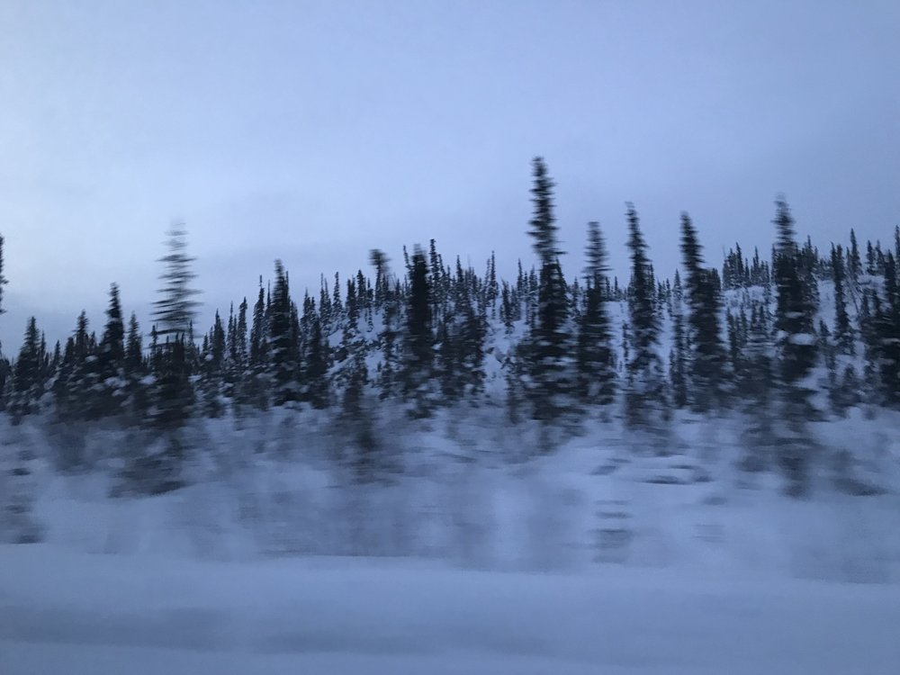 It is just trees and snow…