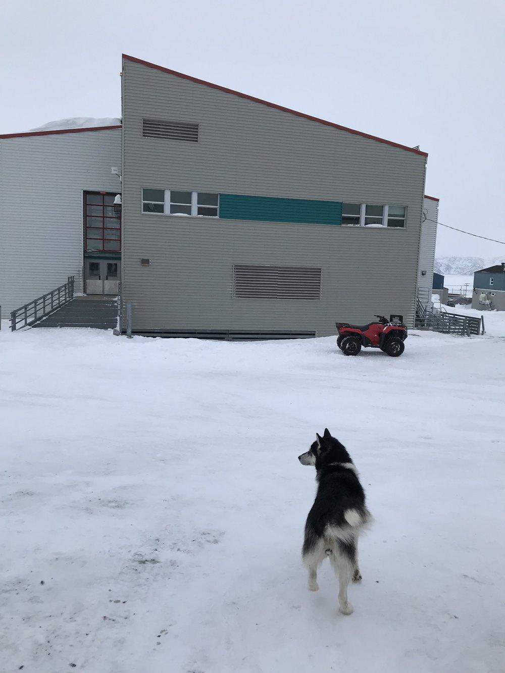 Arsenic School (and cute dog escort)