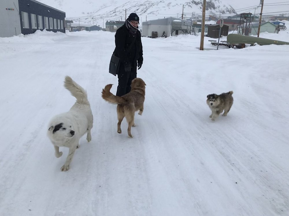 Friendly dogs come and greet us!