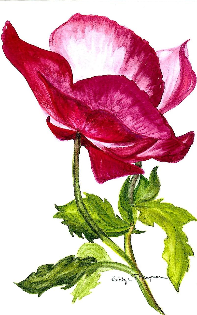 Asian Poppy