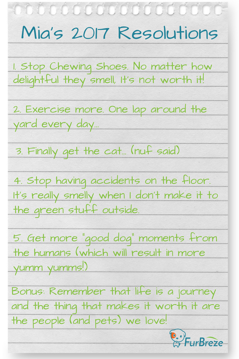 puppys-new-years-resolutions