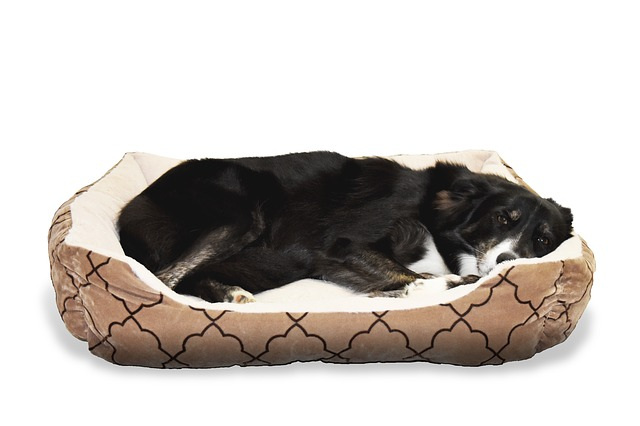 how-to-clean-a-pet-bed