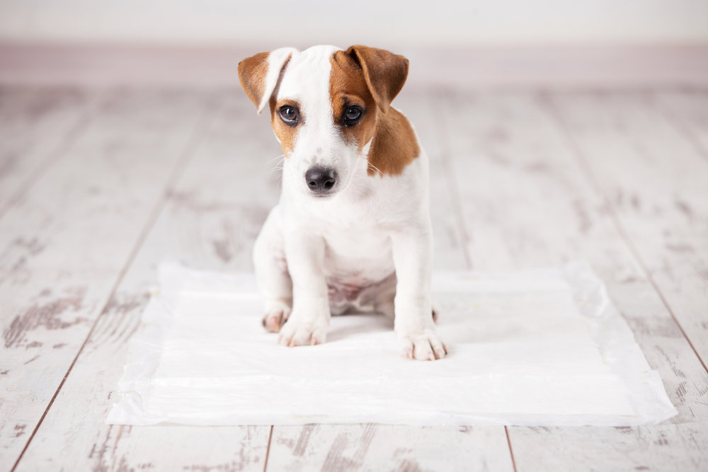 how to clean up puppy pee