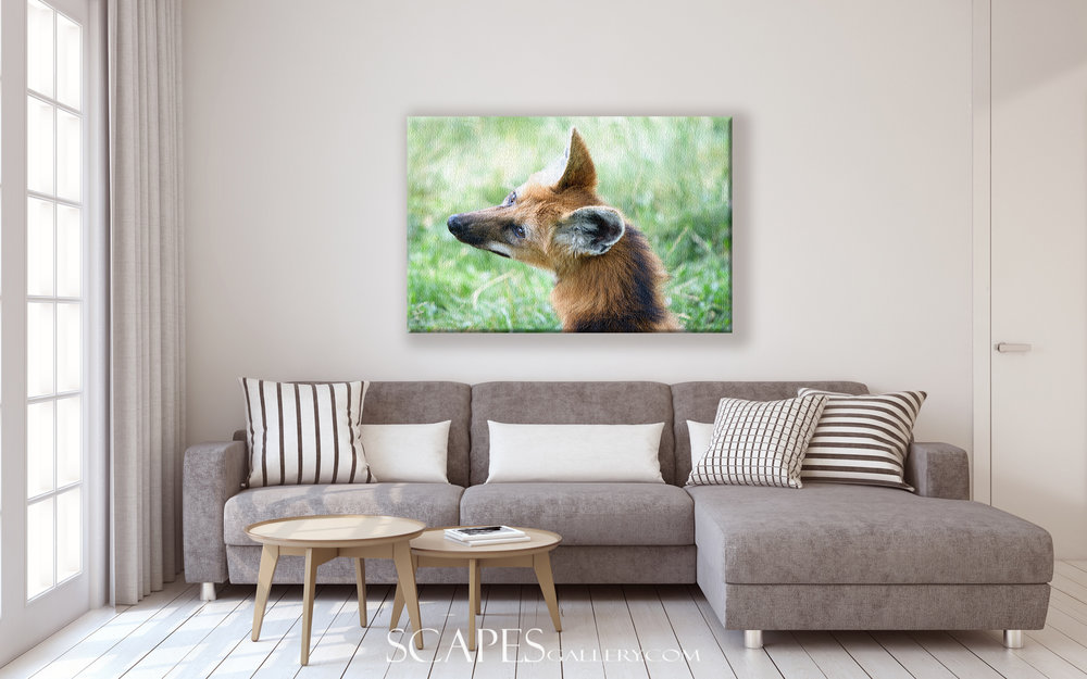 Animalscapes -