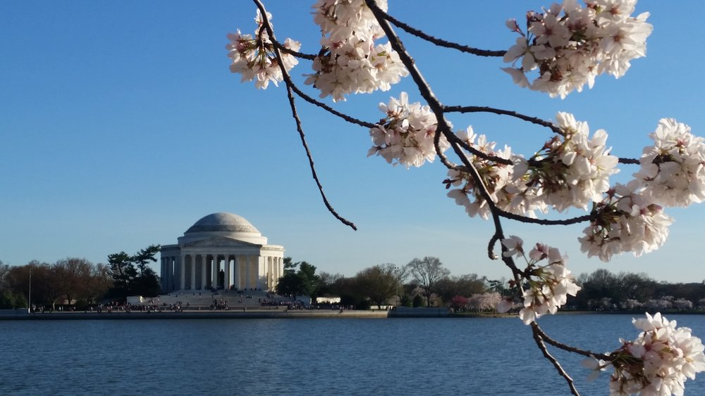 JeffersonMonumentCherryBlossoms