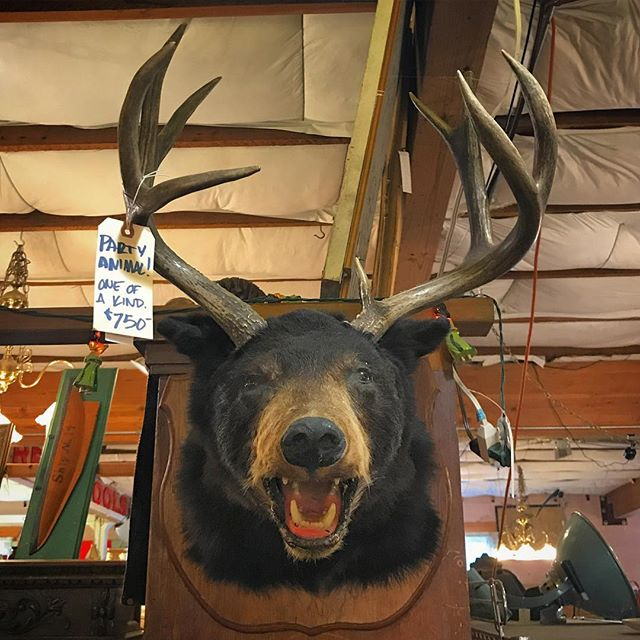 We dub thee The Dear Beer. #beardeer #cryptozoology #cryptozoologist #partyanimal #bizarretaxidermy #taxidermy