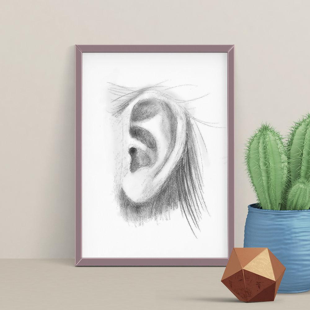 Ear sketch
