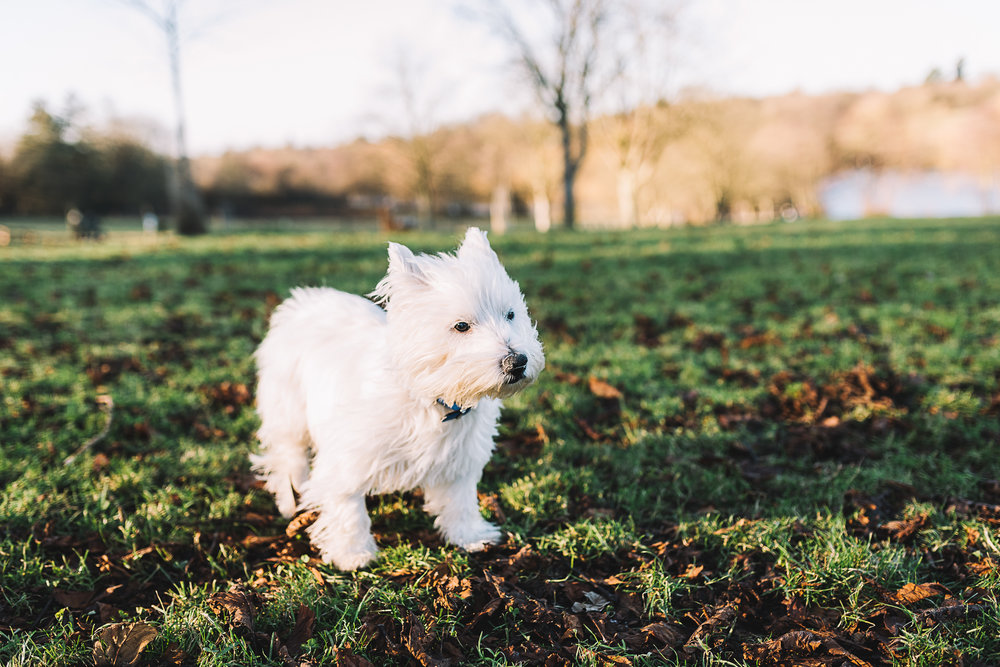 Essex Dog Photo Session - South Weald Park