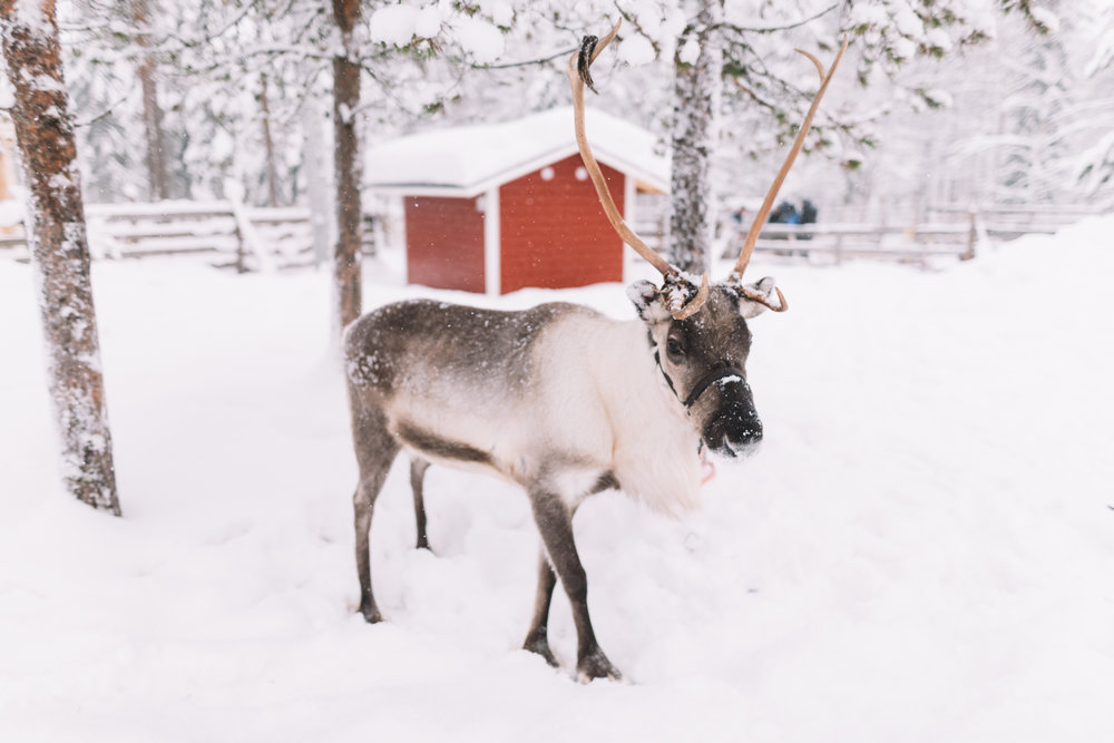 Lapland Wedding Photographer, Lucie Watson Photography