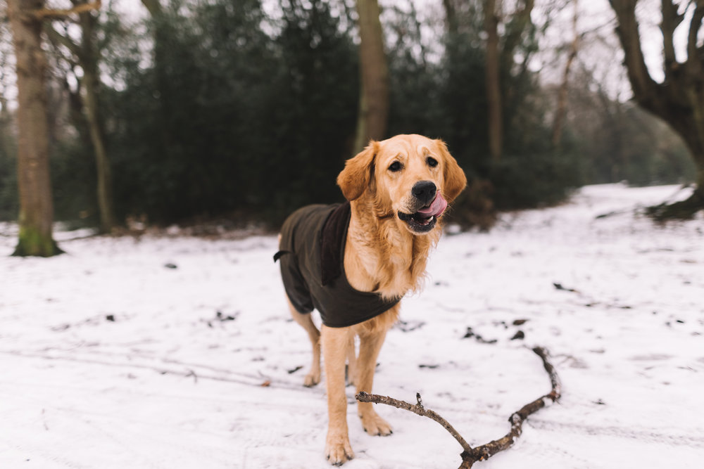 Essex Dog Photography, Hainault Forest, Lucie Watson Photography