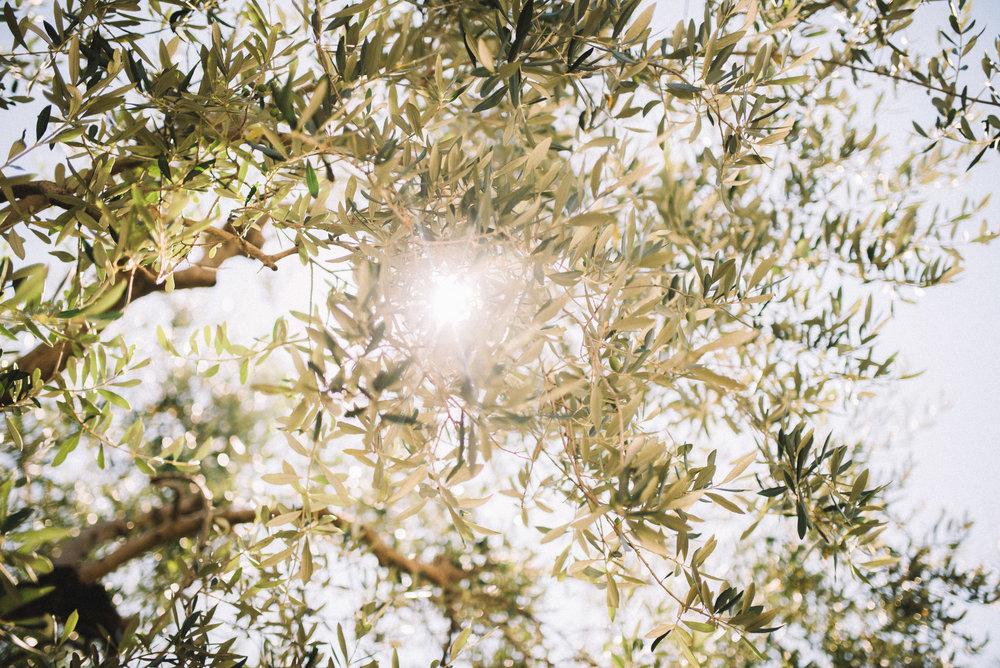 luciewatsonphotography1-27.jpg