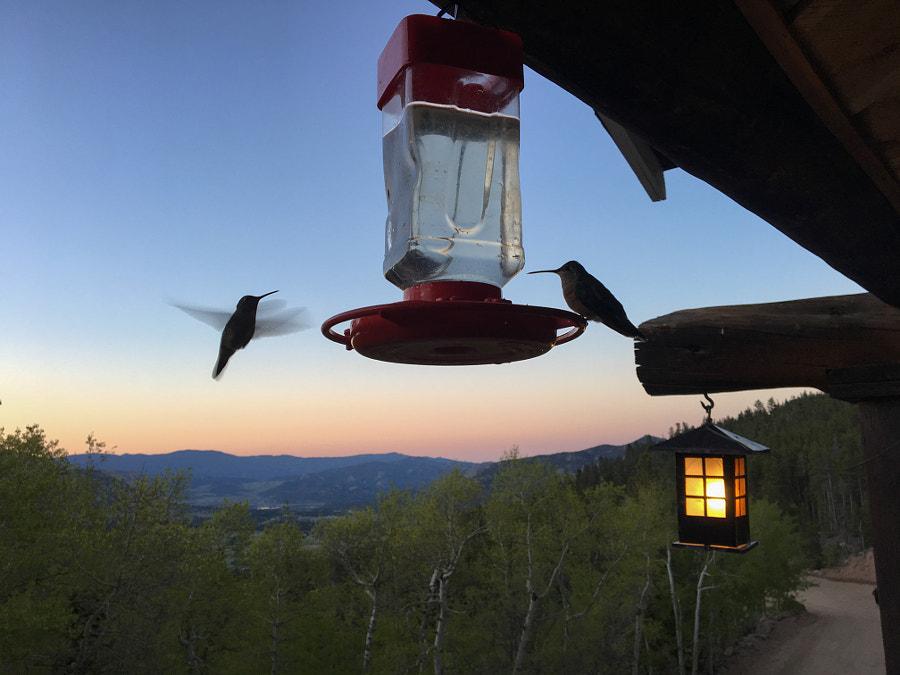 Hummingbirds at Baldpate Inn